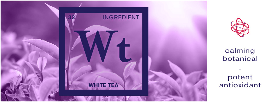 Ingredient Feature - White Tea
